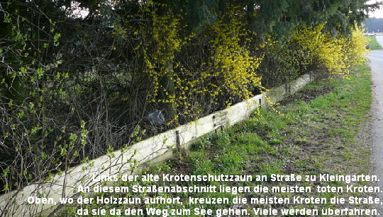 a_Marz_2011_Krotenschutzaktion_Start_18_3_1