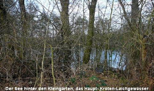 a_Marz_2011_Krotenschutzaktion_Start_18_3_4